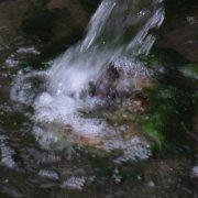 dzambala-under-spring-water_50949329106_o