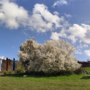 panorama-stupa-und-mirabellenbaum_51021880103_o